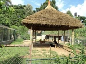 Community dog shelter