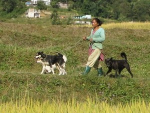 Community Dog Welfare Centre