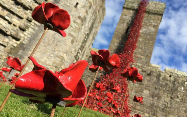 Caernarfon_Castle_Poppies_Sculpture_-_closeup_of_11