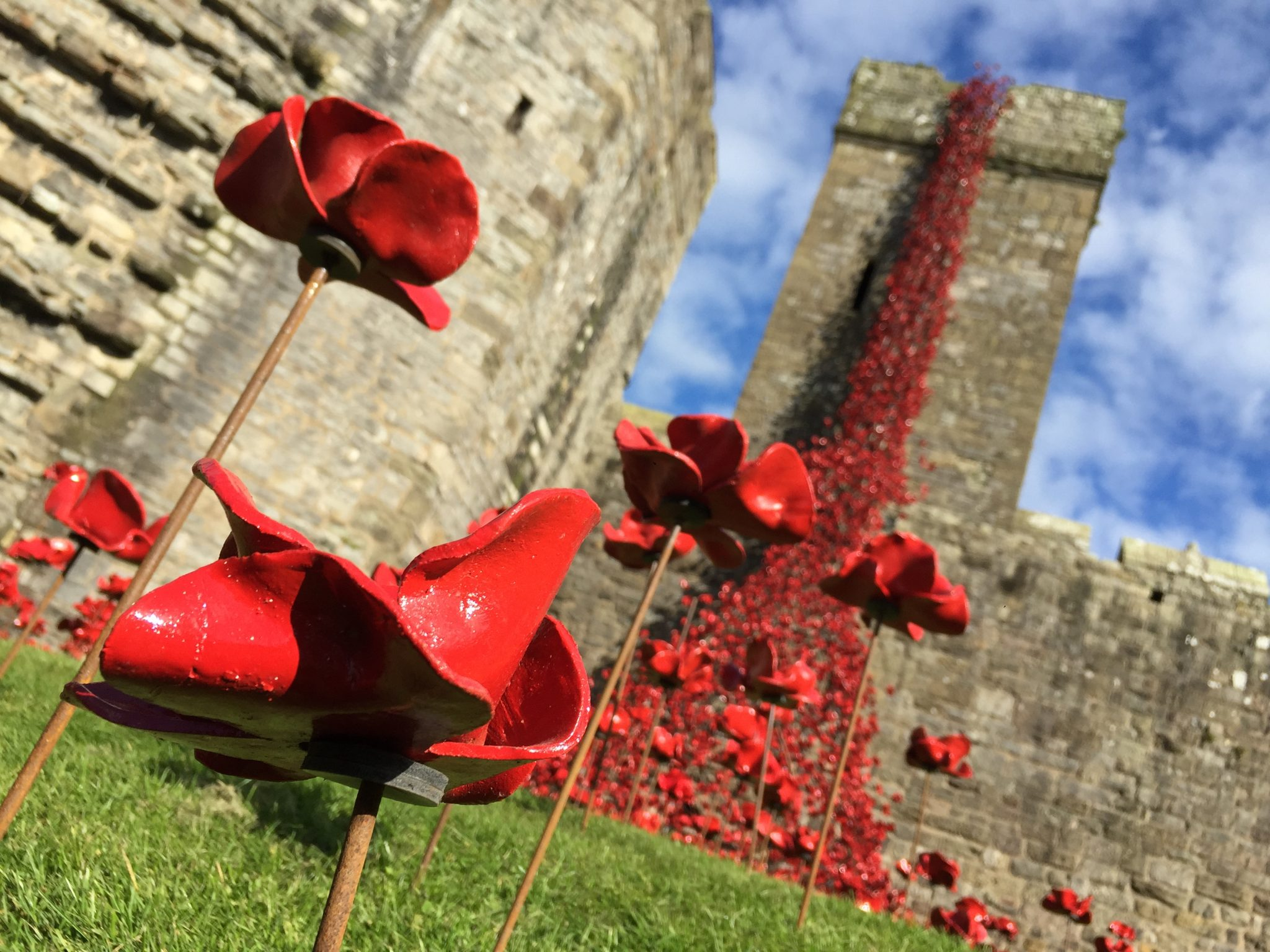 Caernarfon_Castle_Poppies_Sculpture_-_closeup_of_11